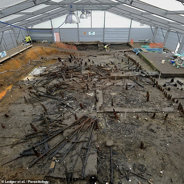 Researchers from the University of Cambridge found that prehistoric settlers living in the freshwater marshes of The Fens were infected by intestinal worms. Pictured, the remains of the Must Farm site, which is located near present-day Peterborough
