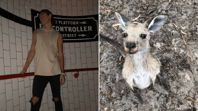 Picture of man who drunkenly adopted a kangaroo on a night out, next to a picture of a baby kangaroo