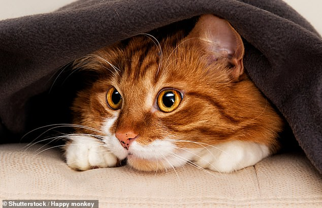 According to the PDSA, 50 per cent of UK adults own a pet: 24 per cent of us have a cat (there's an estimated 10.9 million of them) and 26 per cent own dogs (9.9 million in total). Our love of animals has a long history [File photo]
