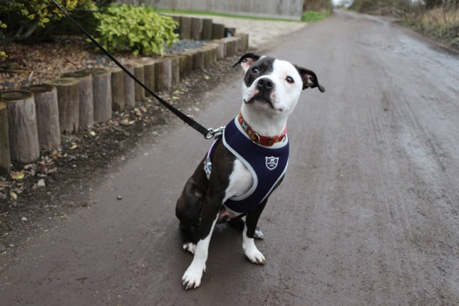 Wobbly dog Winston is looking for a steady home