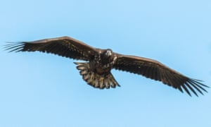 Sea eagles have been reintroduced to the island.