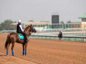Saudi Cup Horse Race Betting Odds: World's Richest Equine Event