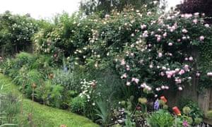 our garden in Cambridge in 2018/19.