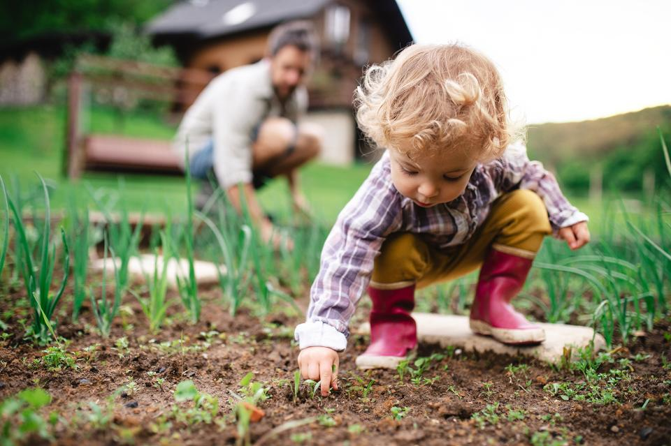 A small girl with unrecognizable father outdoors gardening.